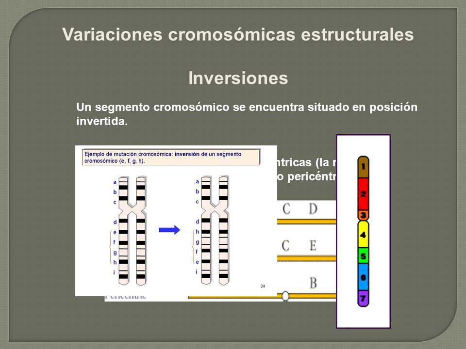 Variaciones cromosómicas estructurales Inversiones Las inversiones pueden ser paracéntricas (la región invertida no incluye al centrómero) o pericéntr