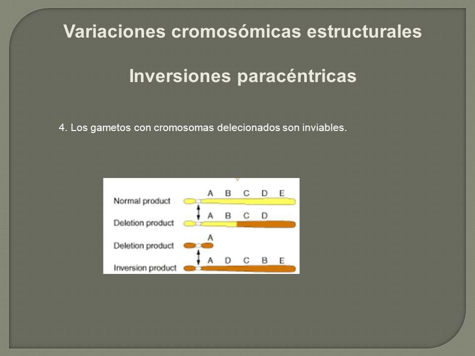 Variaciones cromosómicas estructurales Inversiones paracéntricas 4. Los gametos con cromosomas delecionados son inviables.