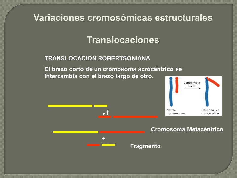 Variaciones cromosómicas estructurales Translocaciones TRANSLOCACION ROBERTSONIANA El brazo corto de un cromosoma acrocéntrico se intercambia con el b