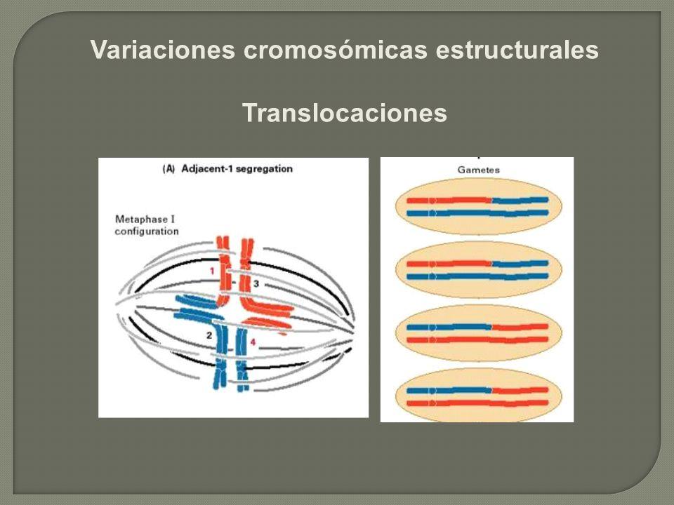 Variaciones cromosómicas estructurales Translocaciones