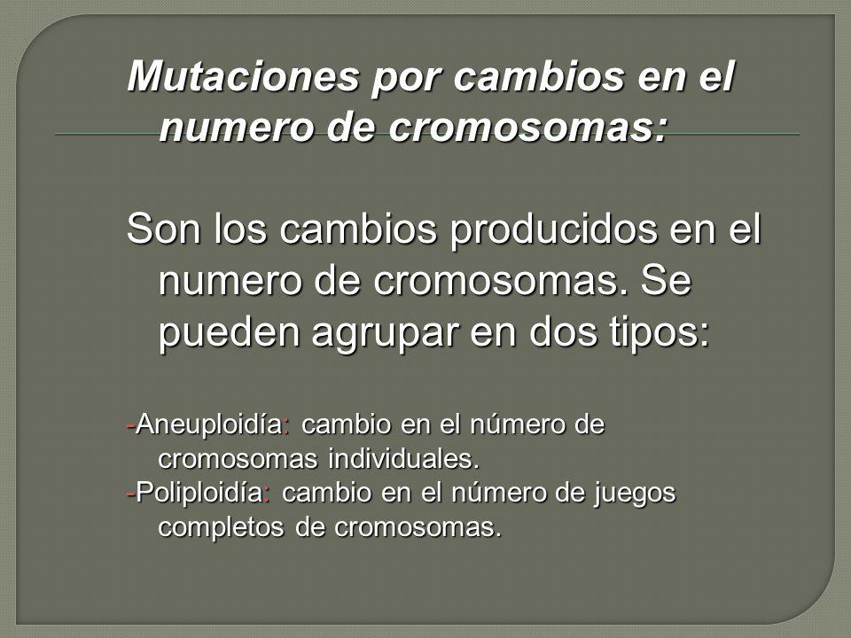 Mutaciones por cambios en el numero de cromosomas: Son los cambios producidos en el numero de cromosomas. Se pueden agrupar en dos tipos: -Aneuploidía