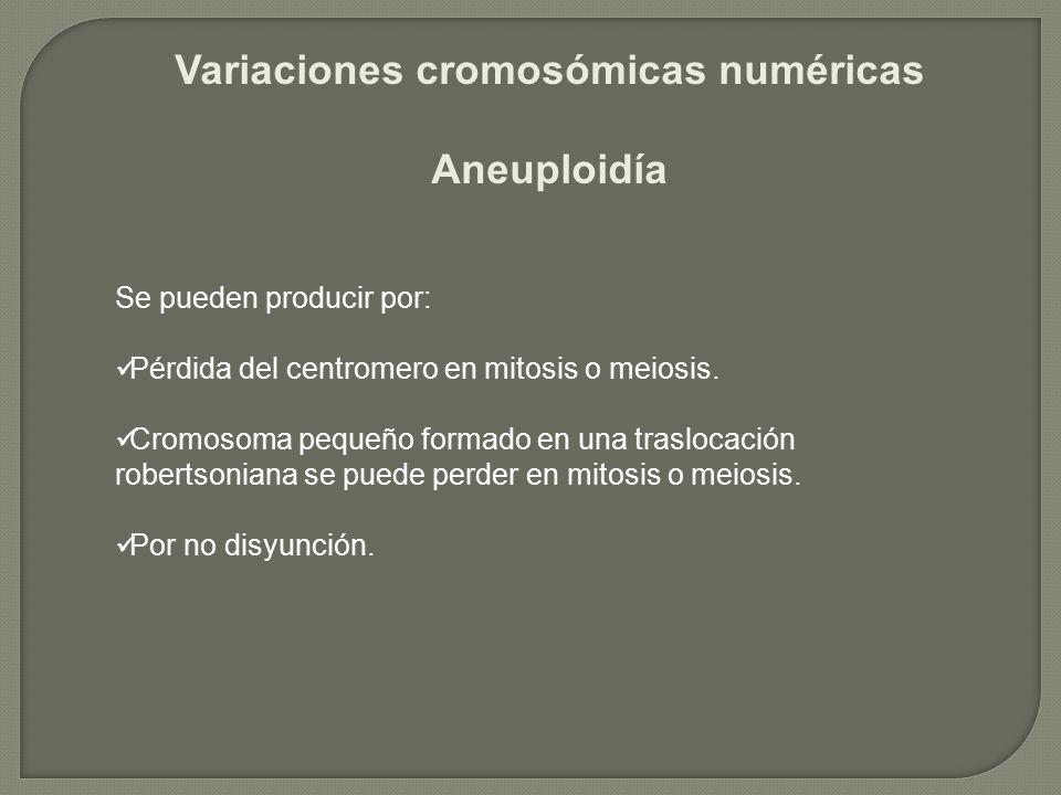 Se pueden producir por: Pérdida del centromero en mitosis o meiosis. Cromosoma pequeño formado en una traslocación robertsoniana se puede perder en mi
