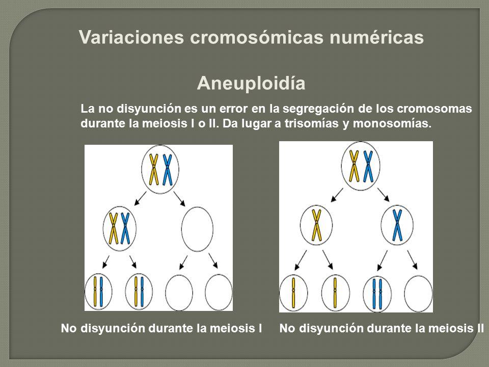 Variaciones cromosómicas numéricas Aneuploidía No disyunción durante la meiosis INo disyunción durante la meiosis II La no disyunción es un error en l
