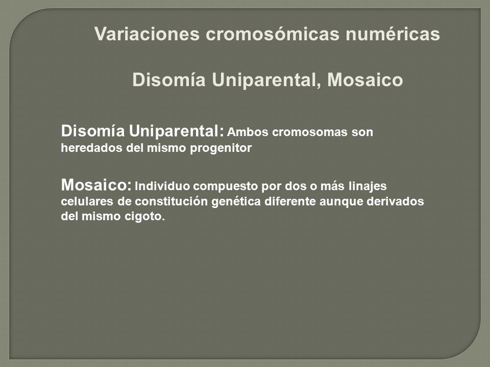 Variaciones cromosómicas numéricas Disomía Uniparental, Mosaico Disomía Uniparental: Ambos cromosomas son heredados del mismo progenitor Mosaico: Indi