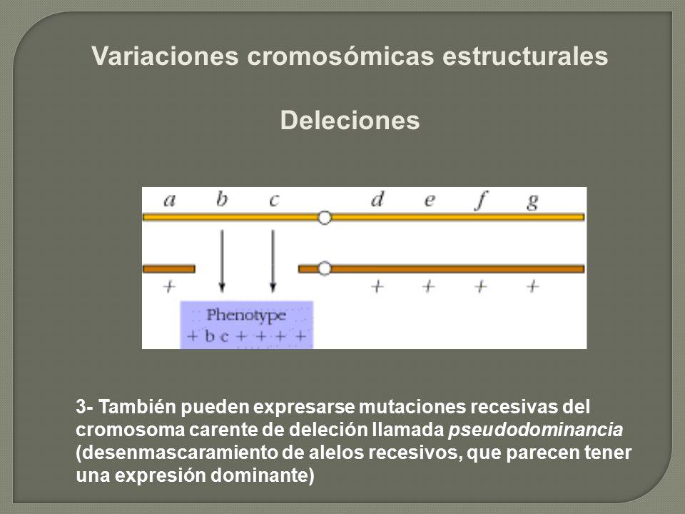 Variaciones cromosómicas estructurales Deleciones 3- También pueden expresarse mutaciones recesivas del cromosoma carente de deleción llamada pseudodo