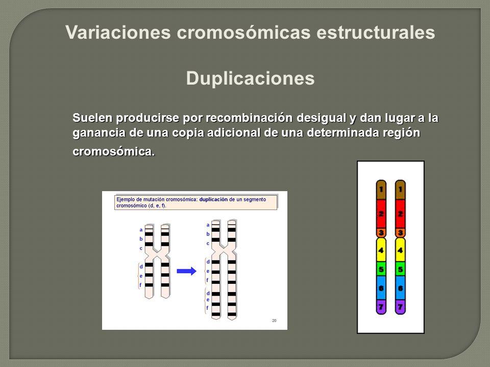 Variaciones cromosómicas estructurales Duplicaciones Suelen producirse por recombinación desigual y dan lugar a la ganancia de una copia adicional de