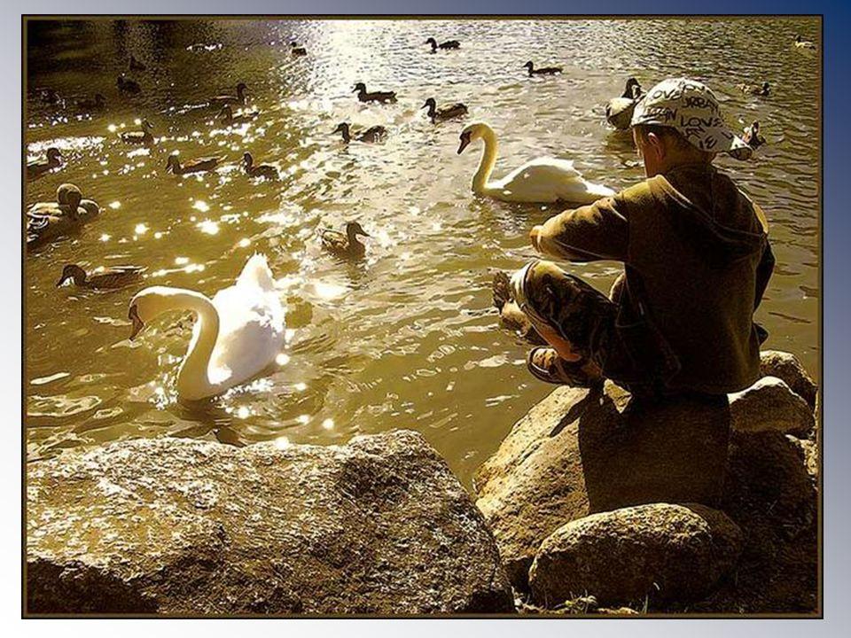 G r o e t j e s P a u l Comme des ailes de l espoir prenant leur envol Like wings of hope taking flight Gezongen door Dana Winner Vertaling Paul wammes