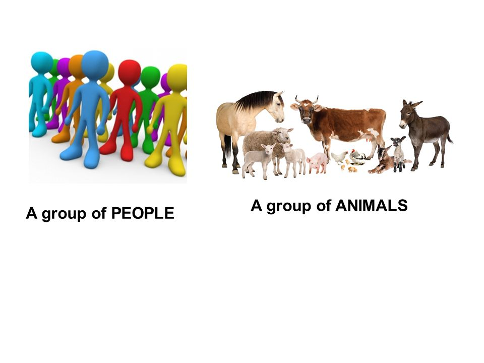 A group of PEOPLE A group of ANIMALS