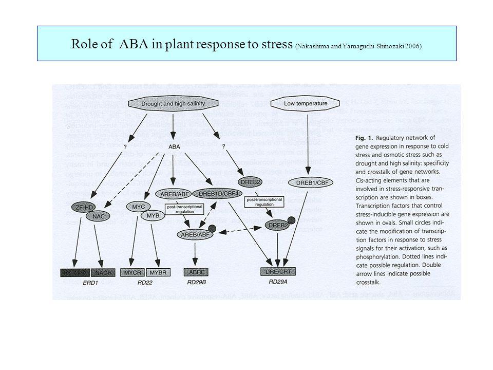 Role of ABA in plant response to stress (Nakashima and Yamaguchi-Shinozaki 2006)