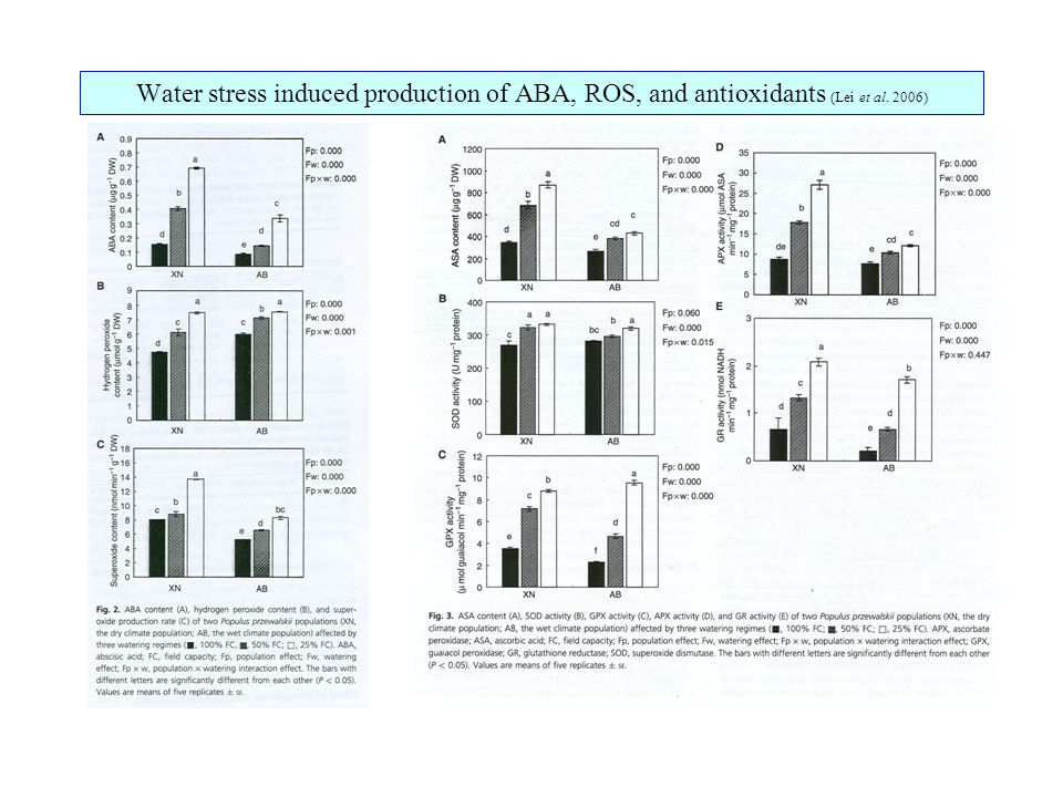 Water stress induced production of ABA, ROS, and antioxidants (Lei et al. 2006)