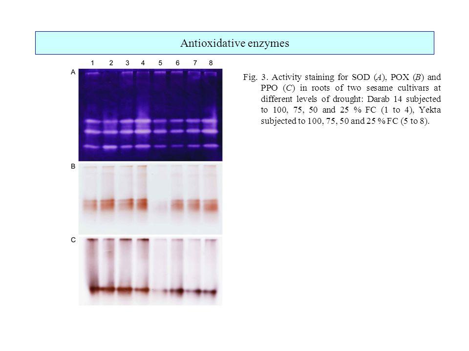 Antioxidative enzymes Fig. 3.