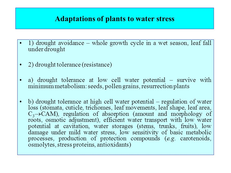 Adaptations of plants to water stress 1) drought avoidance – whole growth cycle in a wet season, leaf fall under drought 2) drought tolerance (resistance) a) drought tolerance at low cell water potential – survive with minimum metabolism: seeds, pollen grains, resurrection plants b) drought tolerance at high cell water potential – regulation of water loss (stomata, cuticle, trichomes, leaf movements, leaf shape, leaf area, C 3  CAM), regulation of absorption (amount and morphology of roots, osmotic adjustment), efficient water transport with low water potential at cavitation, water storages (stems, trunks, fruits), low damage under mild water stress, low sensitivity of basic metabolic processes, production of protection compounds (e.g.