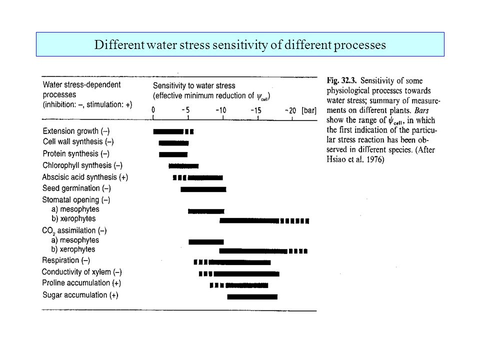 Different water stress sensitivity of different processes