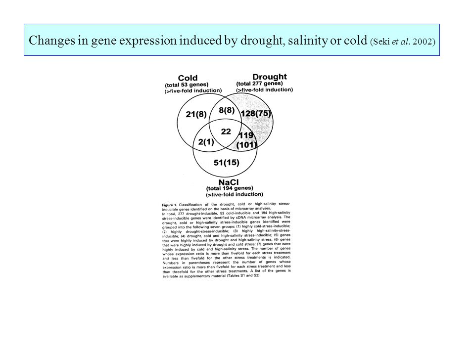 Changes in gene expression induced by drought, salinity or cold (Seki et al. 2002)