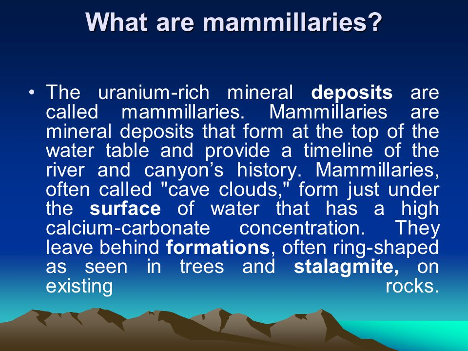 What are mammillaries. The uranium-rich mineral deposits are called mammillaries.