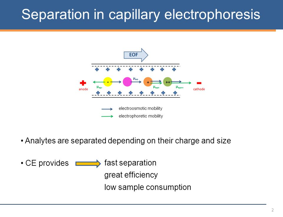 2 Separation in capillary electrophoresis electrophoretic mobility electroosmotic mobility Analytes are separated depending on their charge and size CE provides fast separation great efficiency low sample consumption