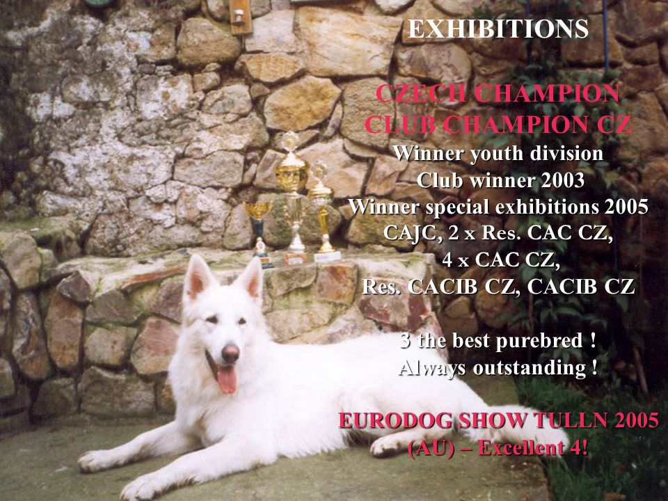 EXHIBITIONS CZECH CHAMPION CLUB CHAMPION CZ Winner youth division Club winner 2003 Winner special exhibitions 2005 CAJC, 2 x Res.