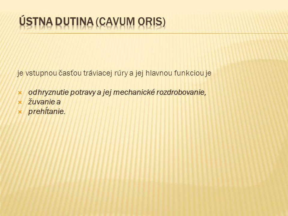 Hrubé črevo (intesinum crassum) tvorí poslednú časť tráviacej rúry.