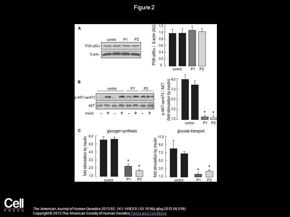 Figure 2 The American Journal of Human Genetics 2013 93, 141-149DOI: (10.1016/j.ajhg.2013.05.019) Copyright © 2013 The American Society of Human Genet