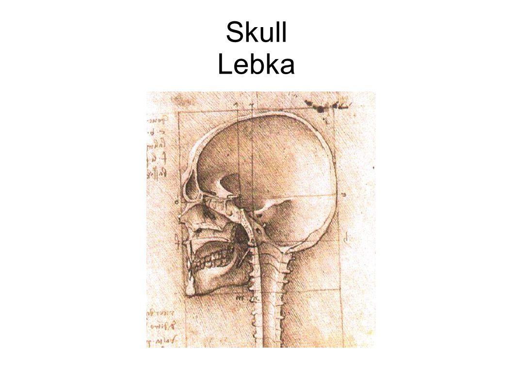 Skull Lebka
