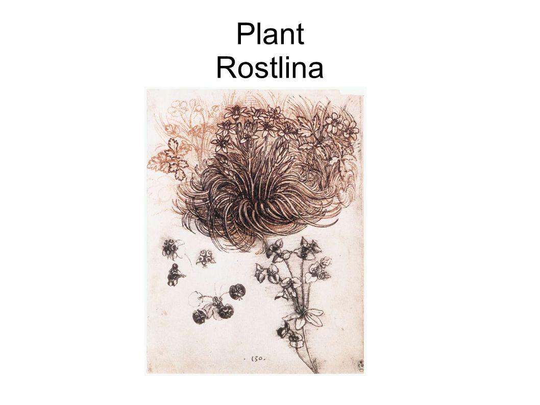 Plant Rostlina