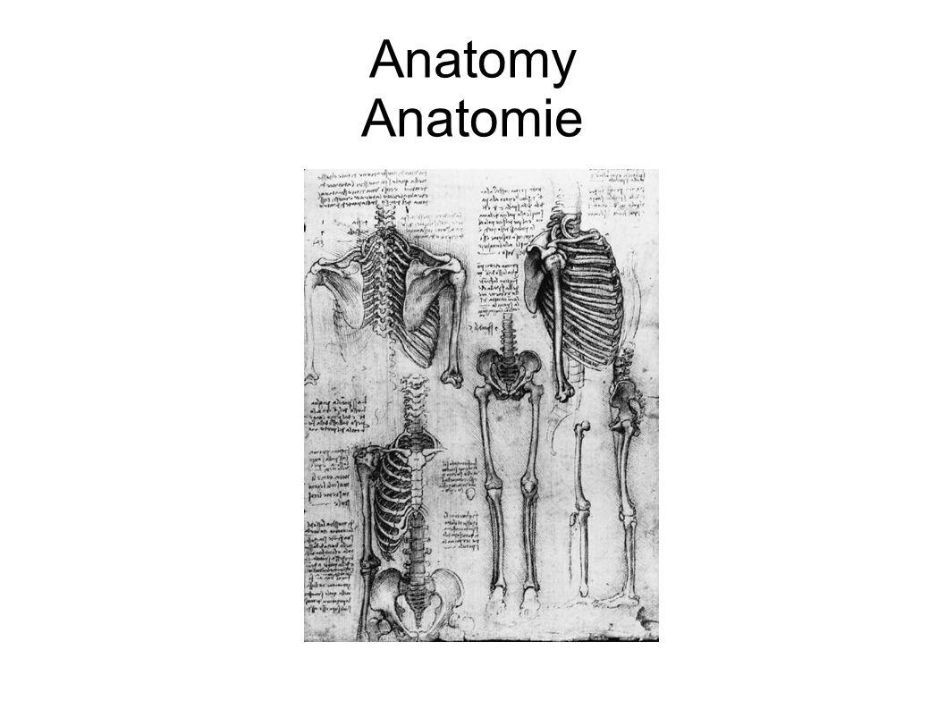 Anatomy Anatomie