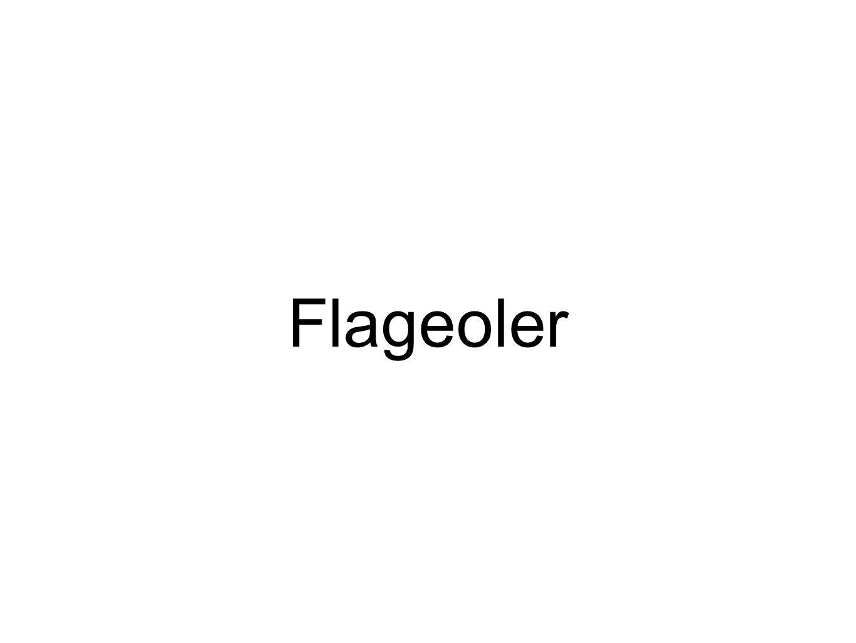 Flageoler