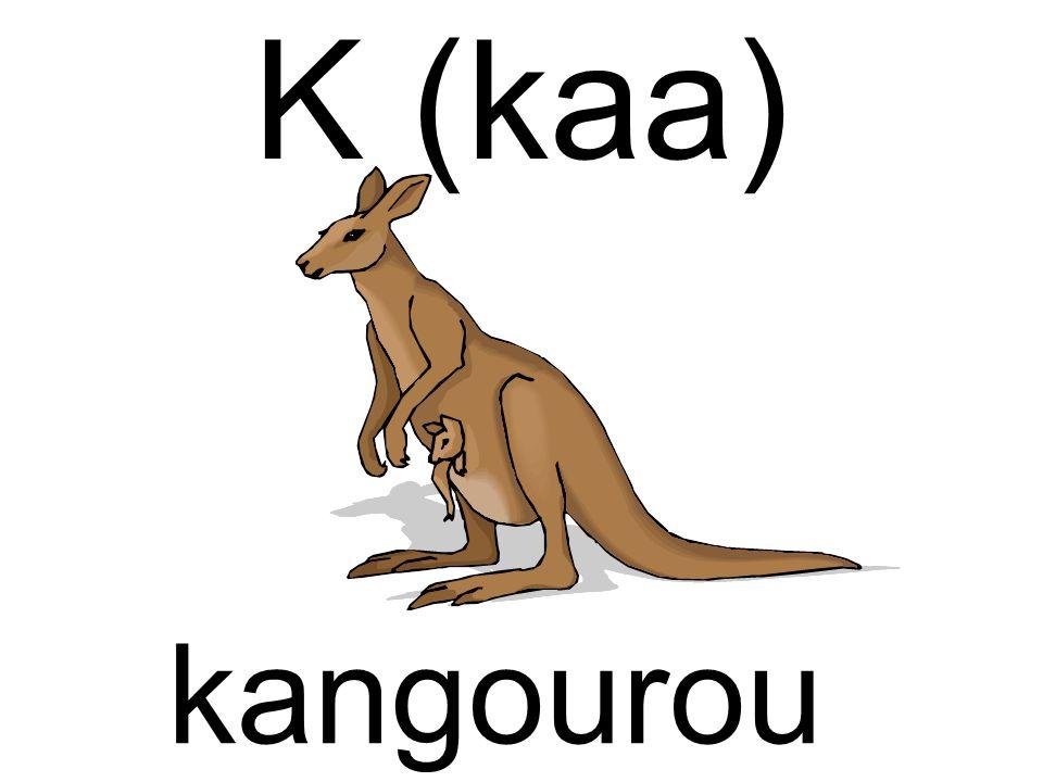 K (kaa) kangourou