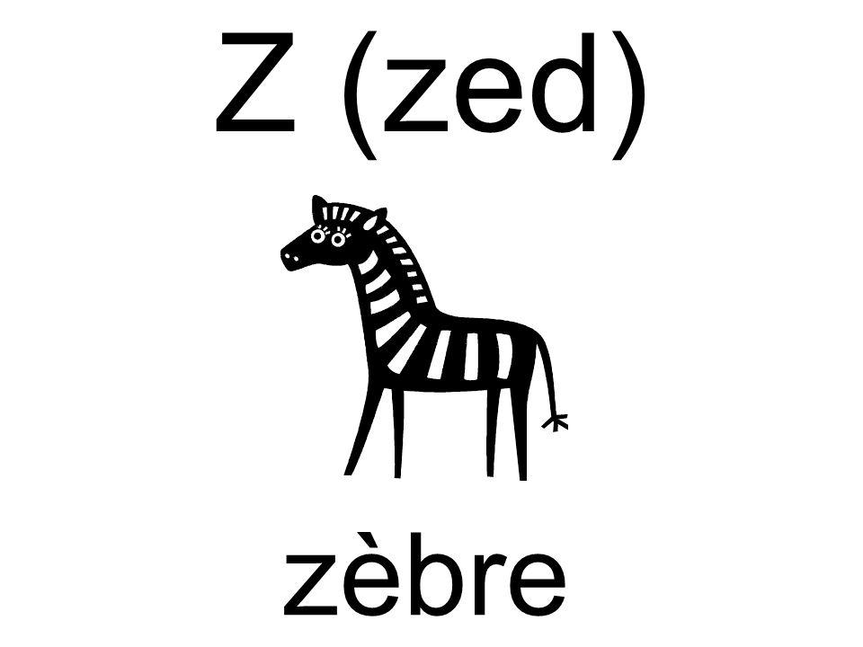 Z (zed) zèbre