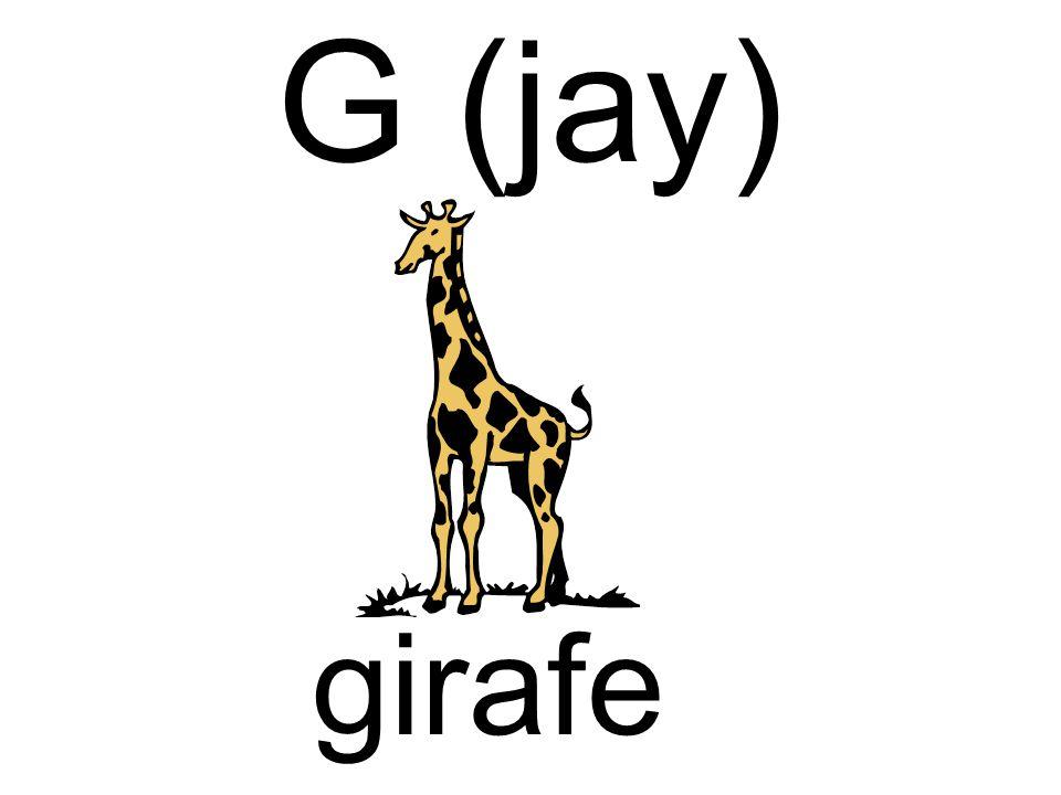 G (jay) girafe