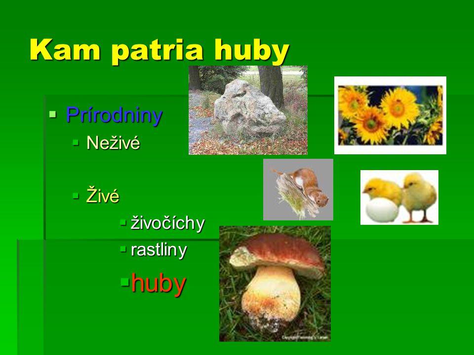 Kam patria huby  Prírodniny  Neživé  Živé  živočíchy  rastliny  huby