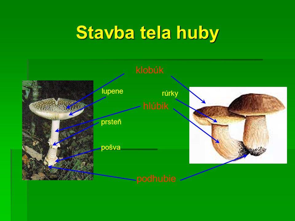 klobúk podhubie lupene rúrky hlúbik prsteň pošva Stavba tela huby