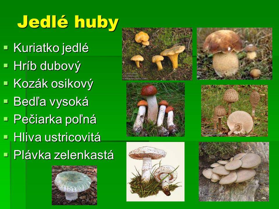 Jedlé huby  Kuriatko jedlé  Hríb dubový  Kozák osikový  Bedľa vysoká  Pečiarka poľná  Hliva ustricovitá  Plávka zelenkastá