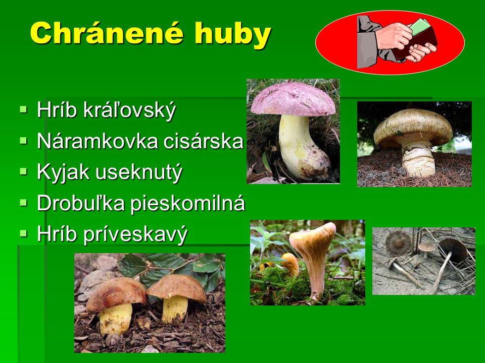 Chránené huby  Hríb kráľovský  Náramkovka cisárska  Kyjak useknutý  Drobuľka pieskomilná  Hríb príveskavý