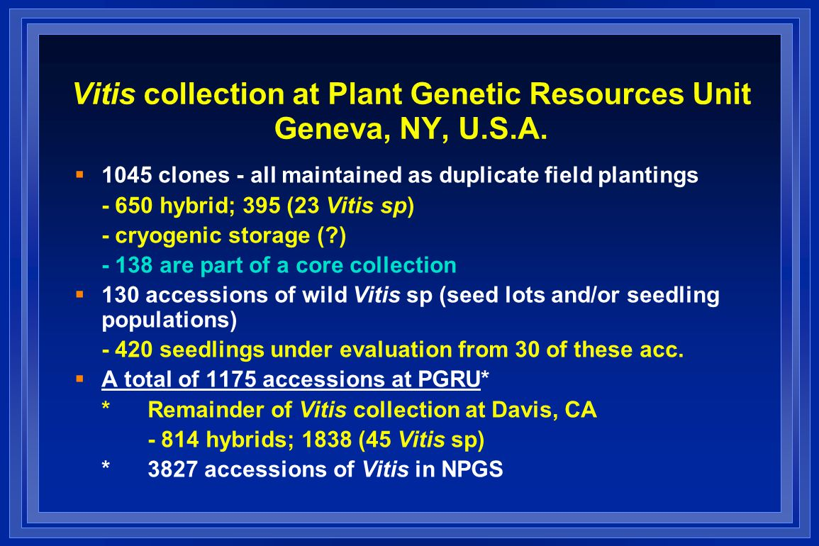 Vitis collection at Plant Genetic Resources Unit Geneva, NY, U.S.A.