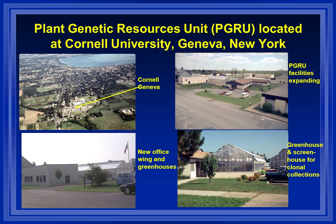 Plant Genetic Resources Unit (PGRU) located at Cornell University, Geneva, New York Cornell Geneva PGRU facilities expanding New office wing and greenhouses Greenhouse & screen- house for clonal collections