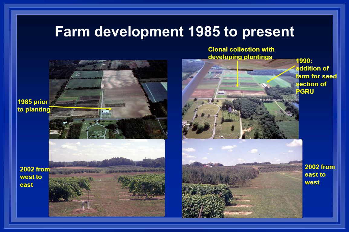 Farm development 1985 to present 1985 prior to planting 2002 from west to east 2002 from east to west 1990: addition of farm for seed section of PGRU Clonal collection with developing plantings