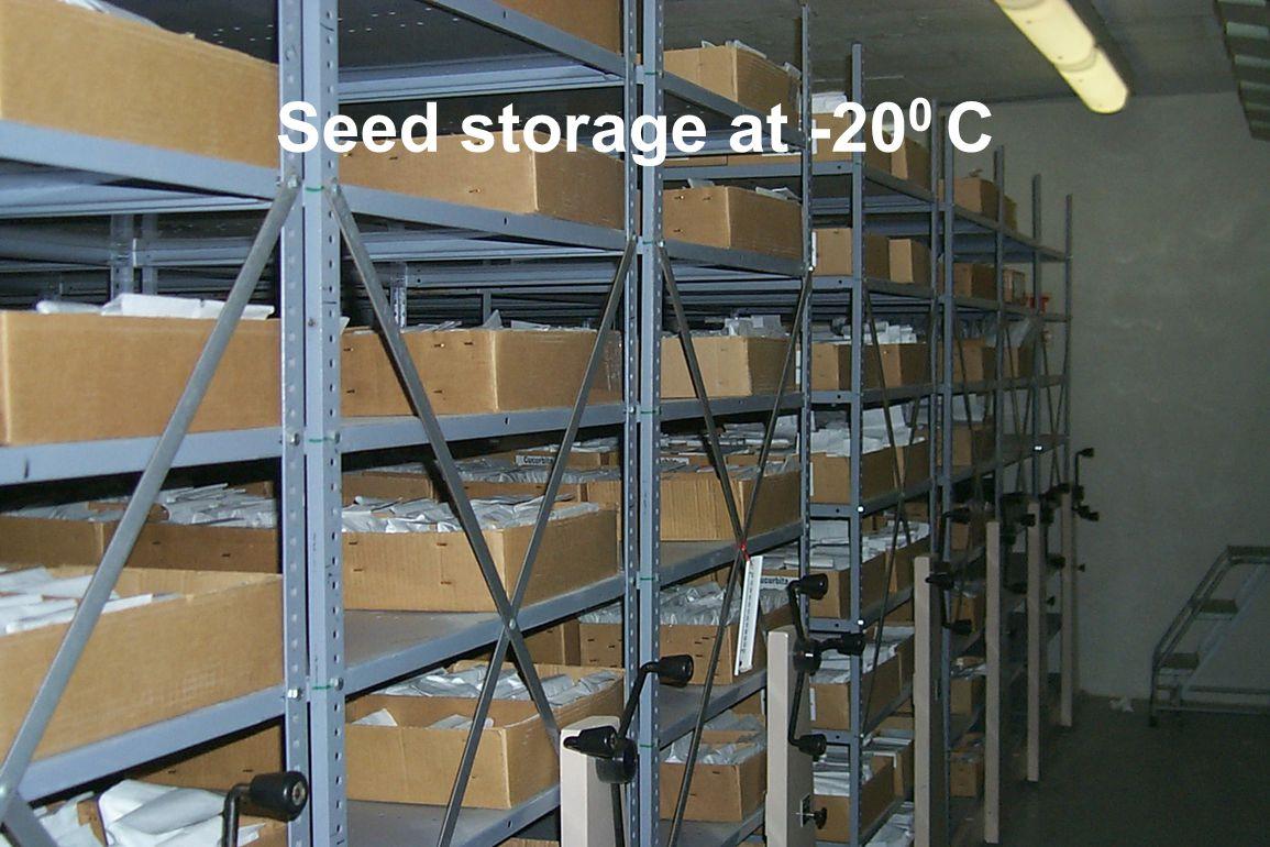 Seed storage at -20 0 C
