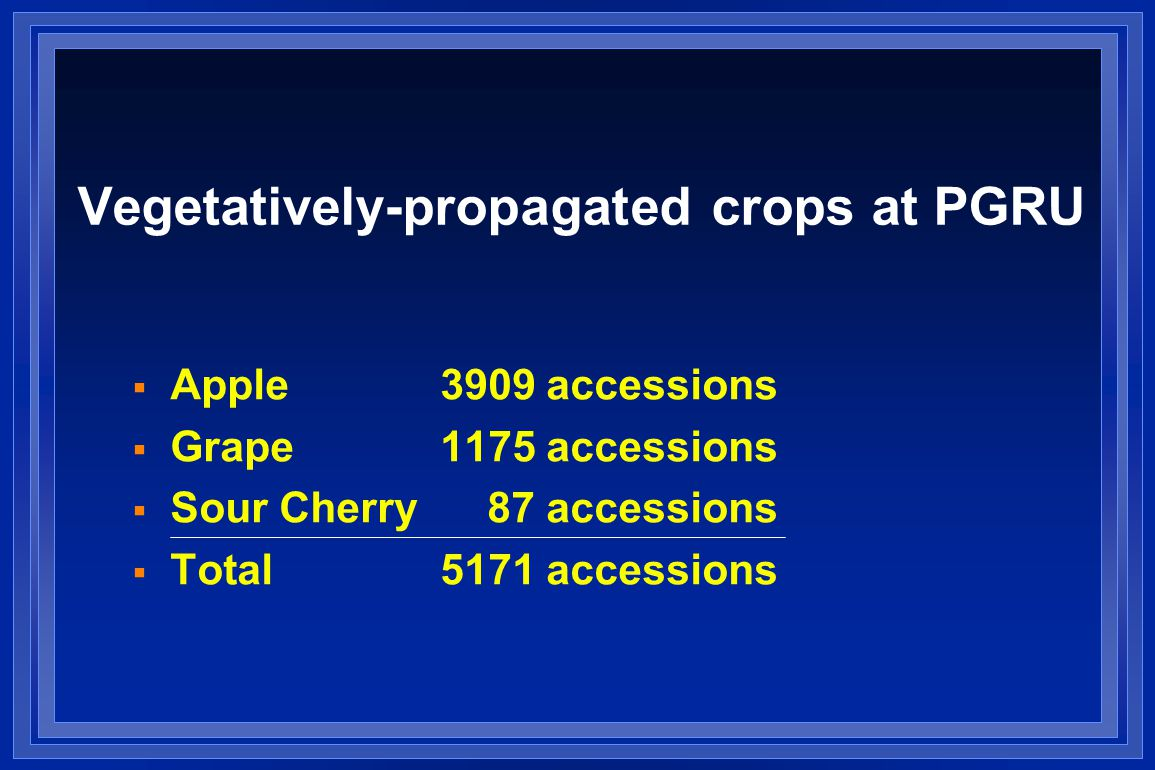 Vegetatively-propagated crops at PGRU  Apple 3909 accessions  Grape1175 accessions  Sour Cherry 87 accessions  Total5171 accessions