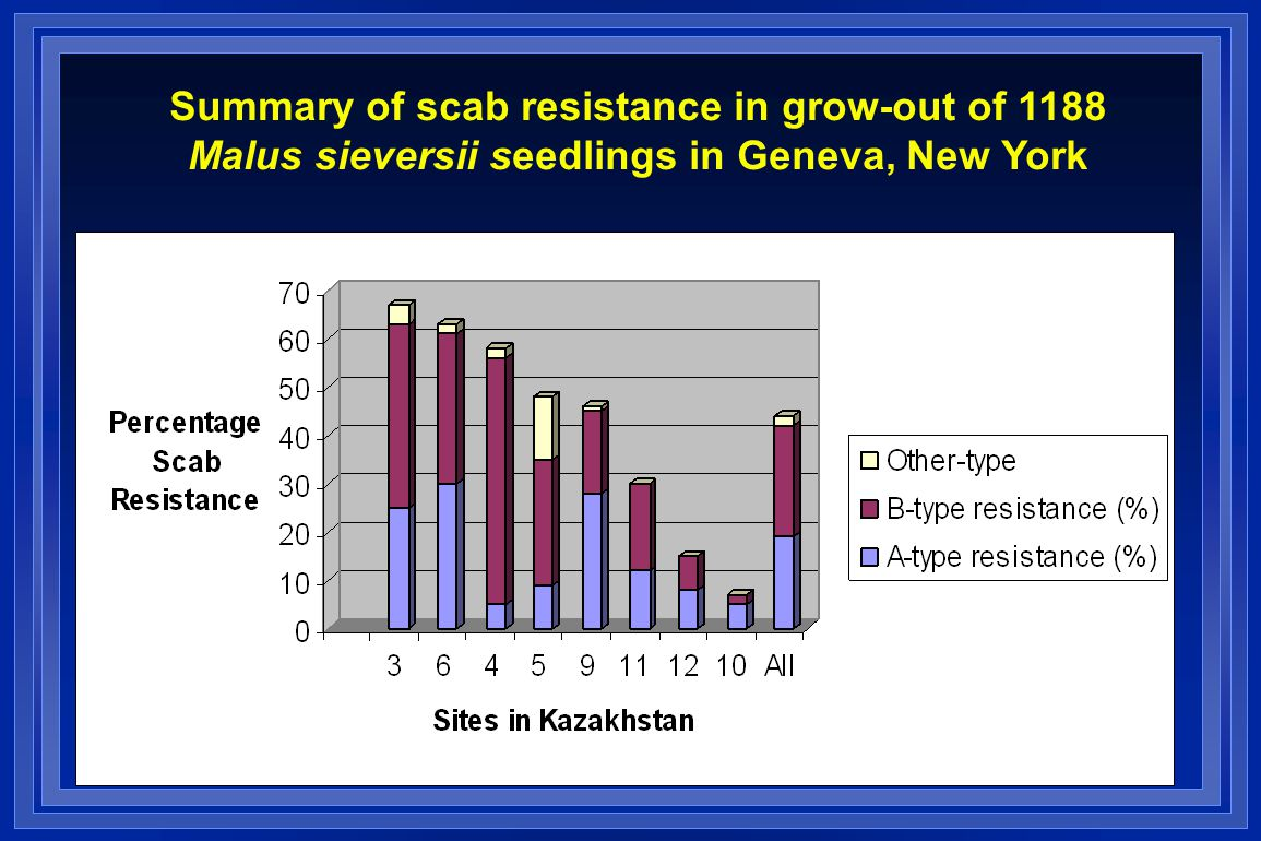 Summary of scab resistance in grow-out of 1188 Malus sieversii seedlings in Geneva, New York