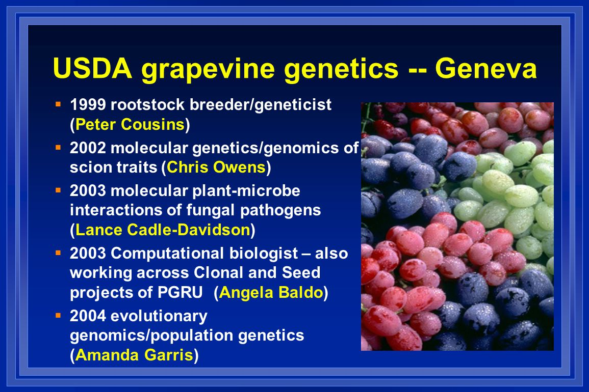 USDA grapevine genetics -- Geneva  1999 rootstock breeder/geneticist (Peter Cousins)  2002 molecular genetics/genomics of scion traits (Chris Owens)  2003 molecular plant-microbe interactions of fungal pathogens (Lance Cadle-Davidson)  2003 Computational biologist – also working across Clonal and Seed projects of PGRU (Angela Baldo)  2004 evolutionary genomics/population genetics (Amanda Garris)