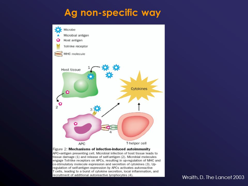 Ag non-specific way Wraith, D. The Lancet 2003