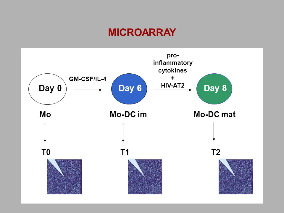 Mo Mo-DC imMo-DC mat GM-CSF/IL-4 Day 0Day 6Day 8 pro- inflammatory cytokines + HIV-AT2 T0T1T2 MICROARRAY