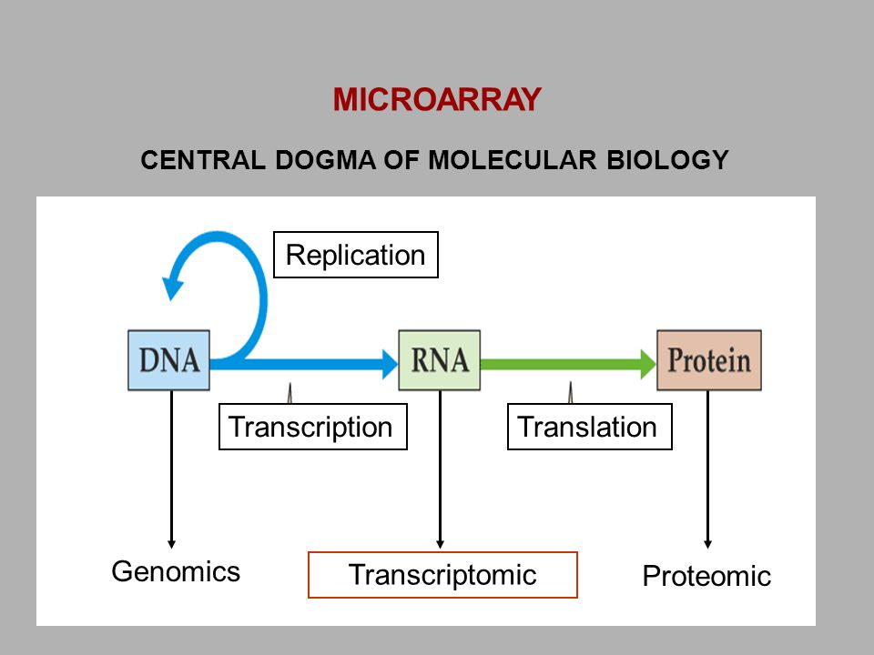 CENTRAL DOGMA OF MOLECULAR BIOLOGY Genomics Transcriptomic Proteomic TranscriptionTranslation Replication MICROARRAY