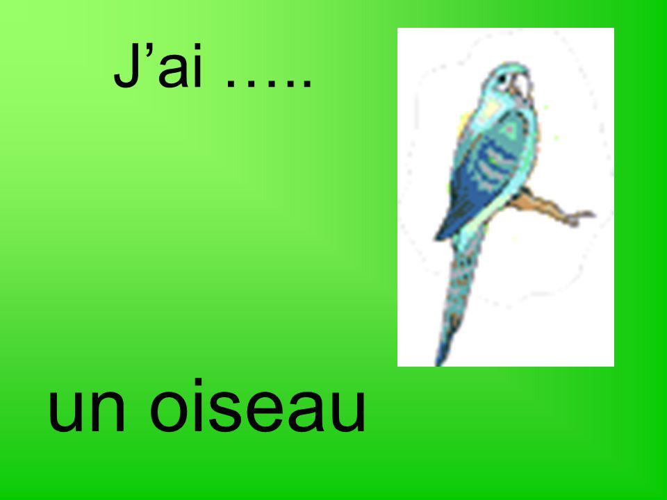 J'ai ….. un oiseau