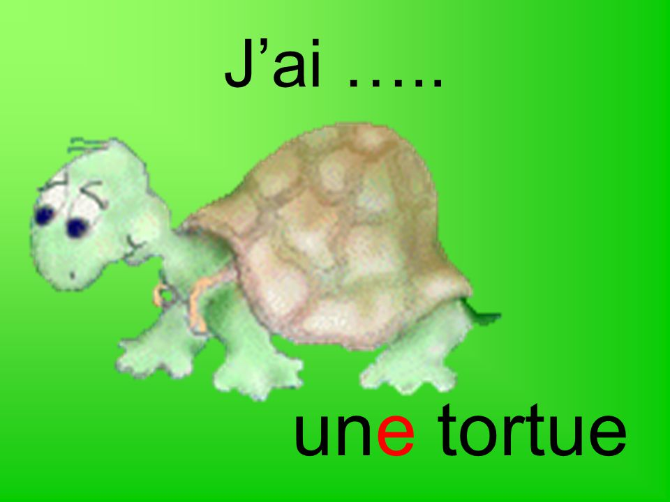 J'ai ….. une tortue