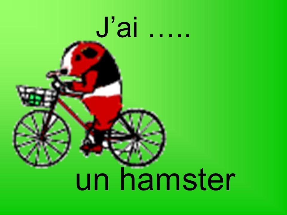 J'ai ….. un hamster