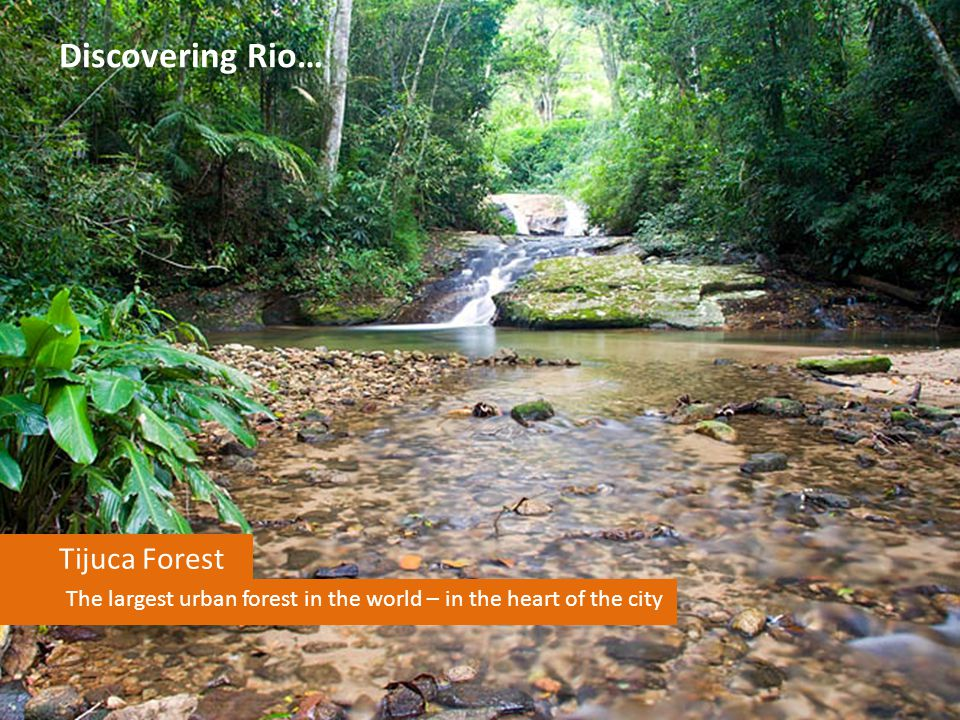 Discovering Rio… Tijuca Forest The largest urban forest in the world – in the heart of the city