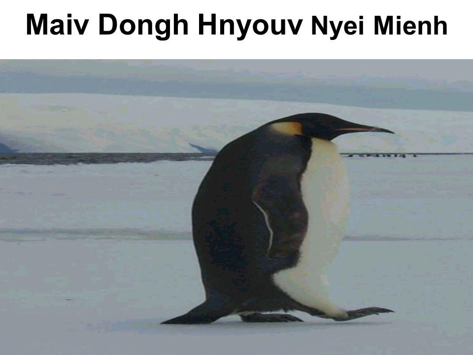 Maiv Dongh Hnyouv Nyei Mienh