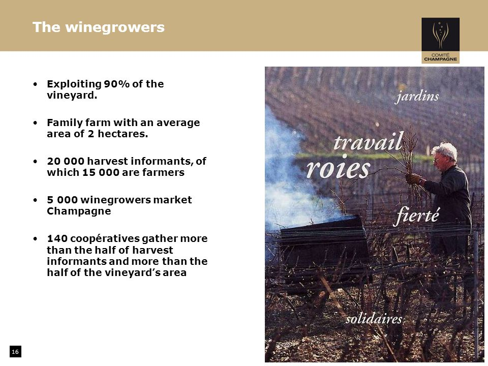The winegrowers Exploiting 90% of the vineyard. Family farm with an average area of 2 hectares.
